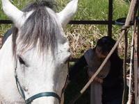馬教室、今週日曜です。 - pieni.. ecole +cafe ピエニ 小さな学校とカフェ