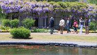 ※ みつけイングリッシュガーデンの藤の花 (2) - 気まぐれ写真工房 new