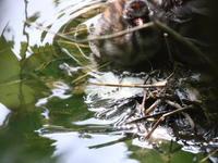 静かな里山 - TACOSの野鳥日記