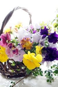 お庭のパンジーでキャンドル作り♪ - お花に囲まれて