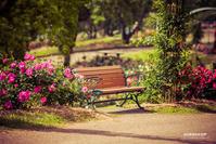 ☆ 薔薇のベンチ ☆ - Trimming