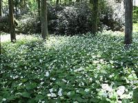 野草園の花③ - つれづれ日記