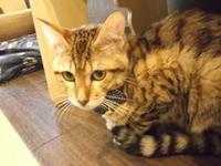 従兄ポンス COUSIN PONS - シェークスピアの猫