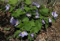 春の花、次々咲いてます(マリオの足太くなる事件アリ) - 標高480mの窓からⅡ