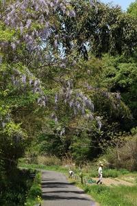 5月の森~その4 - miyabine's フォト日記2~身の周りのきれい・可愛い・面白い~