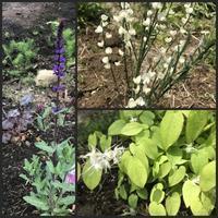 庭の花とコナシなど - 森の扉
