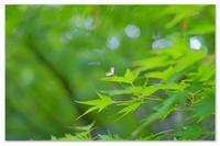 ハートのプロペラ。 - Yuruyuru Photograph