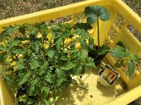 苗の植えつけとアスパラガス - bluecheese in Hakuba & NZ:白馬とNZでの暮らし