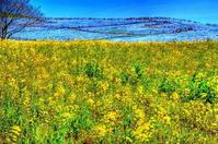 青と黄色のハーモニー - 風の香に誘われて 風景のふぉと缶
