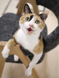 猫のお留守番 ななちゃん編。 - ゆきねこ猫家族