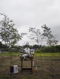地鎮祭を執り行いました!! - 飯田亮建築設計室×COMODO建築工房の時事日想