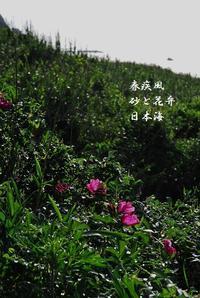 皐月2 - 螺子花便り