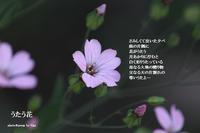 うたう花 - 奇跡の星 ―― 大地に根付く生き方を