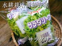 水耕栽培の朝採り新鮮野菜 フレッシュバジルの販売に向けて! - FLCパートナーズストア