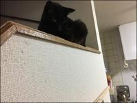 掘る猫 - あずきのばあばの、のんびり日記