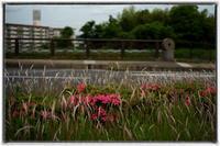 散歩長岡京-44 - Hare's Photolog