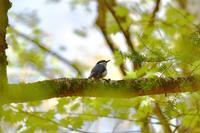 西臼塚周辺散歩 野鳥編 - じいじとばあばのフォトライフ