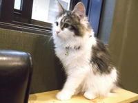 猫カフェ  空陸家 - ネコと文学と猫ブンガク