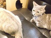 岩合光昭「プロフェッショナル 仕事の流儀」 - ネコと文学と猫ブンガク