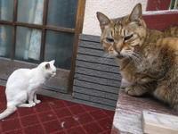 ヨーロッパ黒猫紀行 - ネコと文学と猫ブンガク