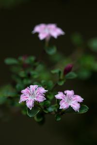 白丁花 - 彩りの軌跡