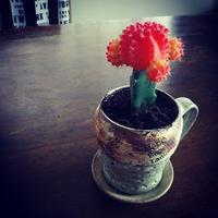 植木鉢。 - concept-if~黄昏色の器たち~