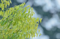 緑雨 - Jester's Pictures