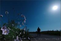 コスモス… - 遥かなる月光の旅