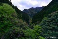 新緑の里山2017:4:渓流の朝 - walk with my Camera