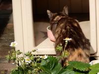 返却の儀 - 愛犬家の猫日記