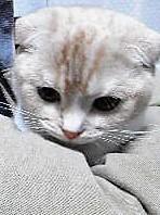 ふと・・ - 猫の小路