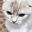 様子 - 猫の小路