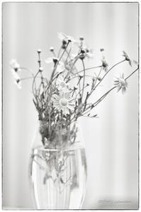 flower - BobのCamera
