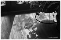 日差し - BobのCamera