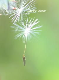写真展・・ - 花々の記憶