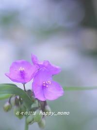 散歩道で・・ - 花々の記憶