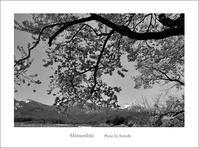 NAGANOの桜 - Minnenfoto