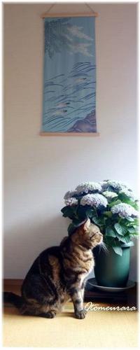 うらら と 紫陽花 - 日々楽しく ♪mon bonheur