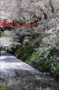 お堀の花筏 - * 写ing!Ⅱ *