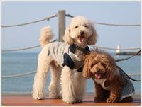 日曜日のお散歩は近場の海のはしごで その2 かんたん港園 大とシャボン玉編 - さくらおばちゃんの趣味悠遊
