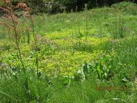 宮迫のお花畑 - 宮迫の! ようこそヤマボウシの森へ
