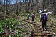 浅貝水芭蕉群生地・秋葉山(新潟旅行1日目) - 歩のち登、ときどき走。