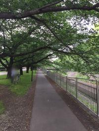 善福寺川を自転車で走る。 - MakikoJoy 上北沢のアロマセラピールームあつあつ便り