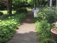 庭がようやく緑に Now Green Season Is Here In My Garden! - my gallery-2