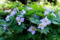 里山の花 - memory