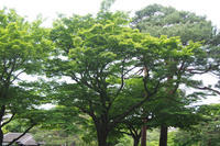 殿ヶ谷戸庭園 - プリプエママのHAPPYな一日