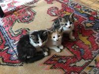 ネコ好きな人だけどうぞ・・・ - カッパドキアのデイジーオヤ・キリムバッグ店長日記