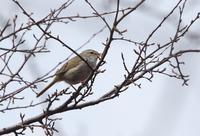 高原ではよく見られます、 - ぶらり探鳥