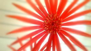 花燦々と~・゚☆、。・:・゚`☆・・゚☆、。・:・゚`☆・ - Beautiful Japan 絵空事