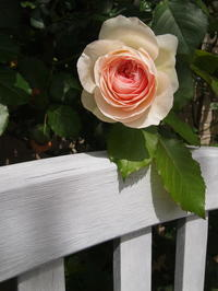 咲き始めた庭のお花たち  続 - 小さな花アトリエ